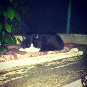 夜回り中に公園で会った猫